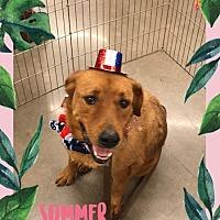 Adopt A Pet :: Carmela - Glendale, AZ