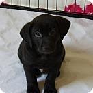 Adopt A Pet :: Drax