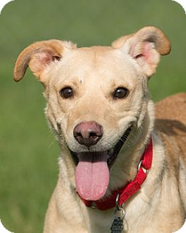 German Shepherd Dog Mix Dog for adoption in Howell, Michigan - Carson