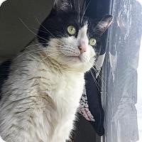 Adopt A Pet :: Gemma - Oakland, CA