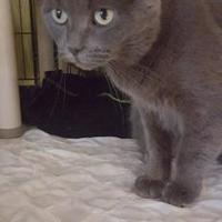 Adopt A Pet :: Duchesse - Montreal, QC