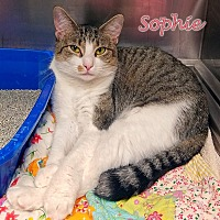 Adopt A Pet :: Sophie - Oak Ridge, TN