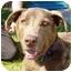 Photo 3 - Labrador Retriever/Shepherd (Unknown Type) Mix Dog for adoption in Berkeley, California - Hero