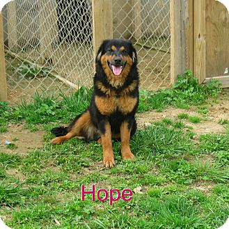 English Shepherd Mix Dog for adoption in East Hartford, Connecticut - Hope in manchester ct