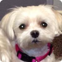 Adopt A Pet :: Gooly - Cotati, CA