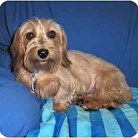 Adopt A Pet :: HANNAH - Palm Coast, FL