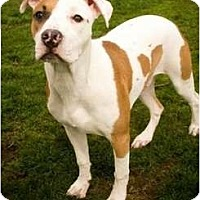 Adopt A Pet :: Jerad - FOSTER NEEDED - Seattle, WA