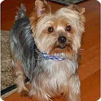 Adopt A Pet :: Sparky - Charlotte, NC