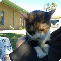 Adopt A Pet :: Trinity - Chandler, AZ