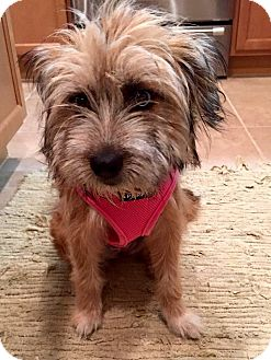 Terrier (Unknown Type, Medium) Mix Dog for adoption in Ft. Lauderdale, Florida - Bubbles