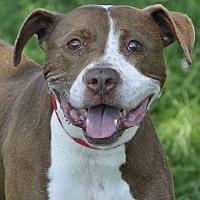 Adopt A Pet :: Millie - Medina, OH