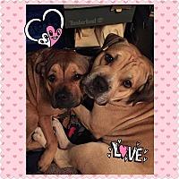 Adopt A Pet :: Nikki and Chino - Hicksville, NY