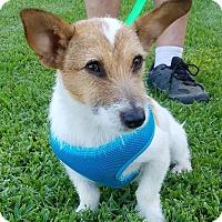 Adopt A Pet :: Gremlin in Houston, TX - Houston, TX