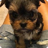 Adopt A Pet :: Cassidy - Ft. Lauderdale, FL