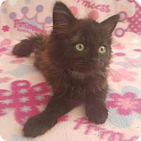 Adopt A Pet :: Luna - Bonsall, CA