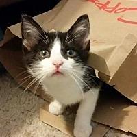 Adopt A Pet :: Captain Kirk - Middleton, WI