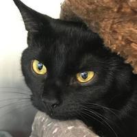 Adopt A Pet :: Pilgrim - Wellsville, NY