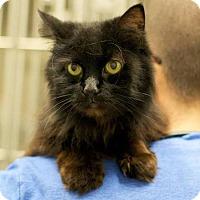 Adopt A Pet :: Cinderella - Troy, MI