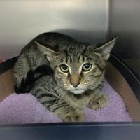 Adopt A Pet :: Jack - Wantagh, NY