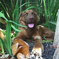 Adopt A Pet :: BERNIE - Fort Lauderdale, FL