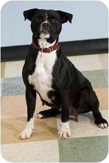 Boxer Mix Dog for adoption in Portland, Oregon - Gypsy