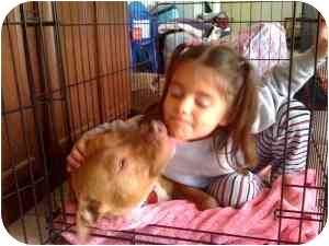 Staffordshire Bull Terrier/American Pit Bull Terrier Mix Dog for adoption in Sacramento, California - Jenny-loves everybody