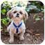 Photo 3 - Shih Tzu Dog for adoption in Sherman Oaks, California - Amir