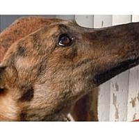 Adopt A Pet :: Sandman & Eartha - N. BABYLON, NY
