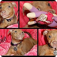 Adopt A Pet :: Janie - Atlanta, GA