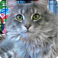 Adopt A Pet :: Sophie - Atlanta, GA