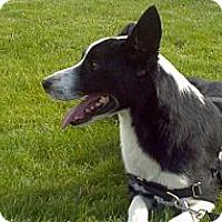 Adopt A Pet :: Jax - Denver, CO