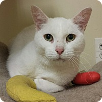 Adopt A Pet :: Snowflake - East Meadow, NY