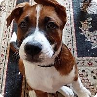 Adopt A Pet :: Rascal - Glendale, AZ