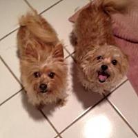 Adopt A Pet :: Priscilla (and Elvis) - Frisco, TX