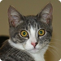 Adopt A Pet :: Campbell - North Branford, CT