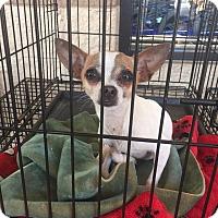 Adopt A Pet :: Sprinkle - Gainesville, FL