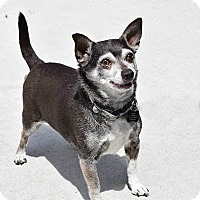 Adopt A Pet :: Rizzoli - Denver, CO