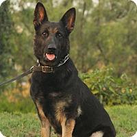 Adopt A Pet :: Nora - Laguna Niguel, CA