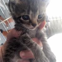 Adopt A Pet :: Hannah - Clarksdale, MS