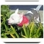 Photo 1 - American Staffordshire Terrier Mix Dog for adoption in San Clemente, California - BEYONCE