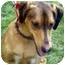 Photo 2 - Greyhound/Doberman Pinscher Mix Dog for adoption in Warren, New Jersey - Lucky Girl