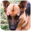 Photo 3 - German Shepherd Dog Dog for adoption in McDonough, Georgia - Kelsie