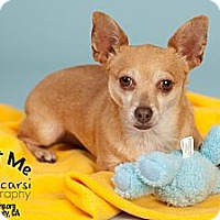 Adopt A Pet :: chico - Tustin, CA