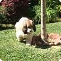 Adopt A Pet :: Dakota & Cody - Toluca Lake, CA