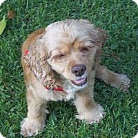 Adopt A Pet :: HONEY BUN/Special Pricing - Glastonbury, CT