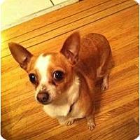 Adopt A Pet :: Tinks - Vancouver, BC