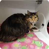 Adopt A Pet :: Hailey - Kingston, WA