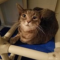 Adopt A Pet :: Zara - Geneseo, IL