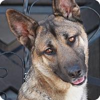 Adopt A Pet :: Chuck von Wolsic - Los Angeles, CA