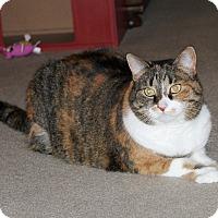 Adopt A Pet :: Essie - Nolensville, TN